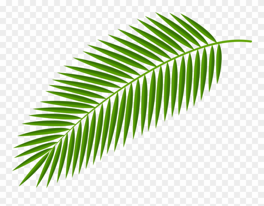 Palm fronds clipart png