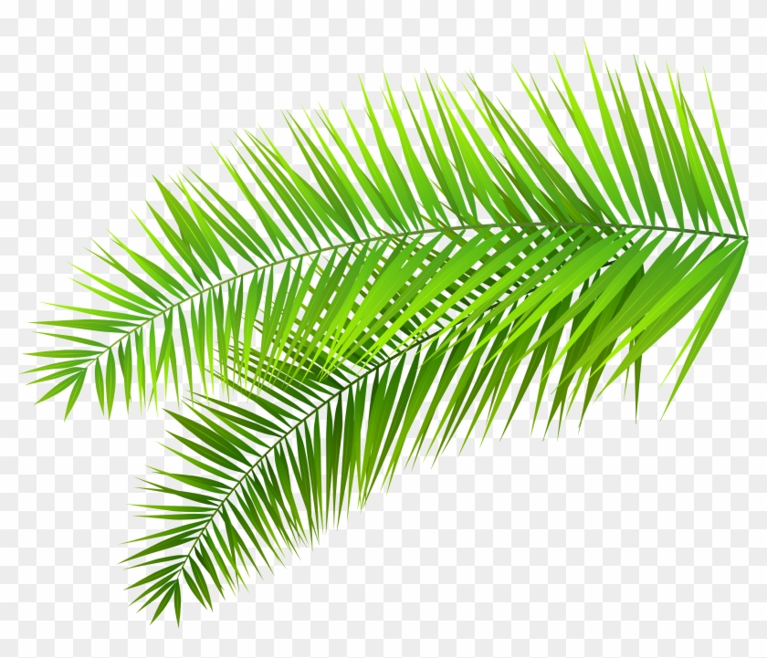 Palm fronds clipart png clipart black and white stock Leaves Clipart - Transparent Palm Leaves Png, Png Download ... clipart black and white stock