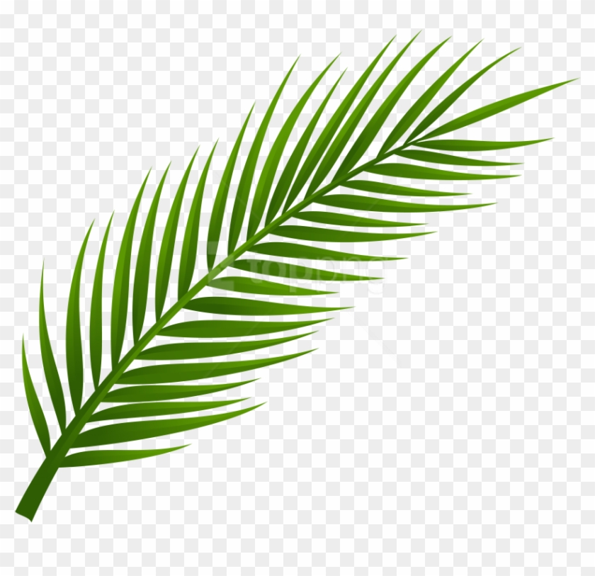 A palm leaf clipart image black and white stock Free Png Download Palm Tree Leaf Clipart Png Photo - Free Palm Leaf ... image black and white stock