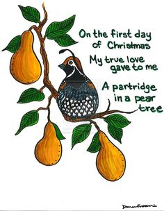A partridge in a pear tree clipart jpg black and white 17 Best images about 12 Days Christmas | 12 days, The words and Words jpg black and white