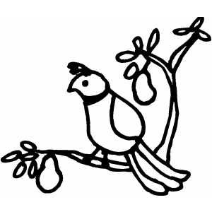 A partridge in a pear tree clipart vector black and white download Partridge In A Pear Tree Clip Art - ClipArt Best vector black and white download