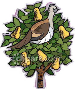 A partridge in a pear tree clipart graphic free stock Partridge in a pear tree clipart - ClipartFest graphic free stock