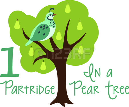 A partridge in a pear tree clipart clip art royalty free download Partridge In A Pear Tree Stock Photos & Pictures. Royalty Free ... clip art royalty free download
