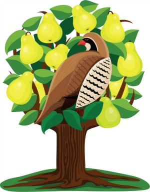A partridge in a pear tree clipart stock The 12 days of job searching…and a partridge in a pear tree ... stock