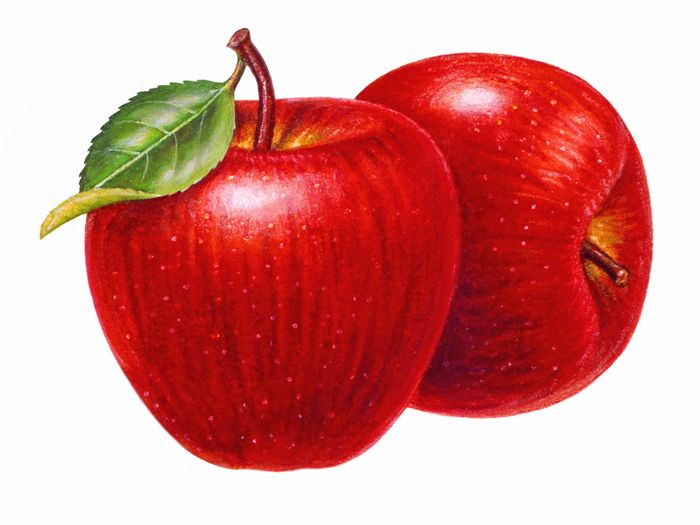 Aapples clipart jpg royalty free library Apple Clip Art | Free Download Clip Art | Free Clip Art | on Clipart ... jpg royalty free library