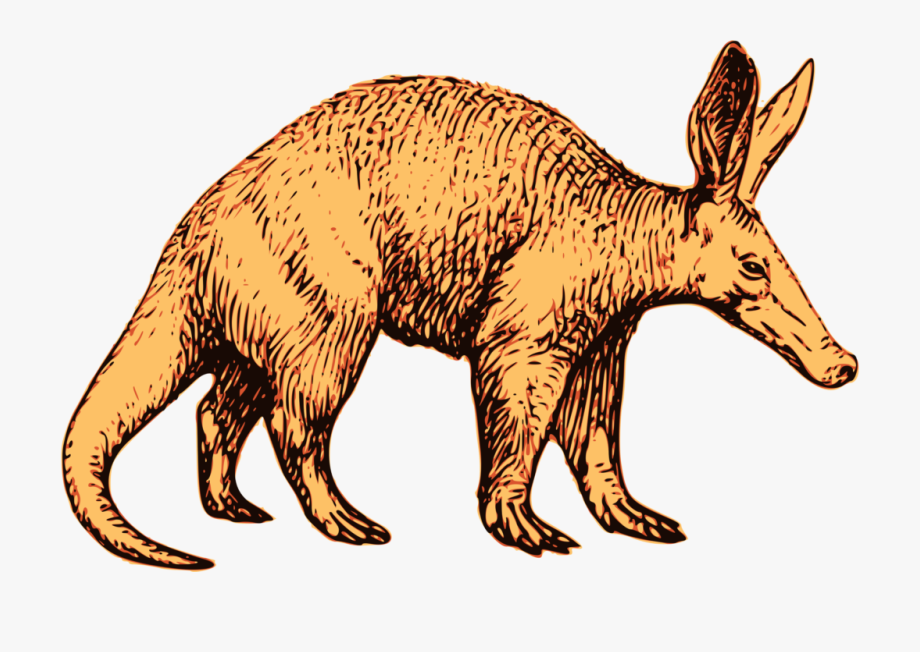 Clipart Aardvark Aardvark Dd214 Aardvark Definition - Aardvark T ... graphic royalty free download