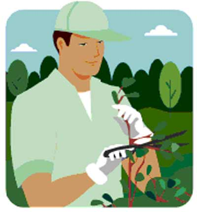 Aborist clipart vector royalty free stock Arborist Cliparts - Cliparts Zone vector royalty free stock