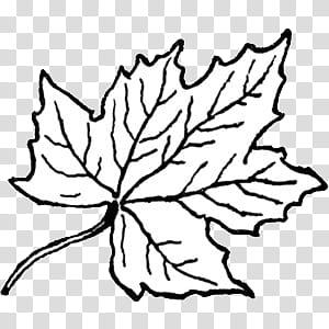 Abstract maple leaf clipart coloring black and white clip free stock Black and white II, maple leaf illustration transparent background ... clip free stock