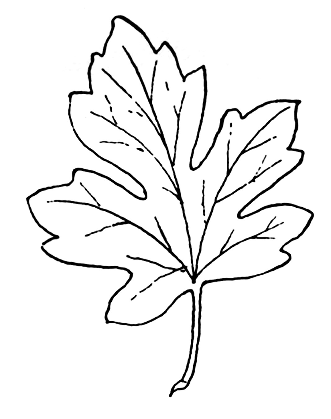 Abstract maple leaf clipart coloring black and white vector royalty free library Black And White Leaves Clipart Group with 81+ items vector royalty free library