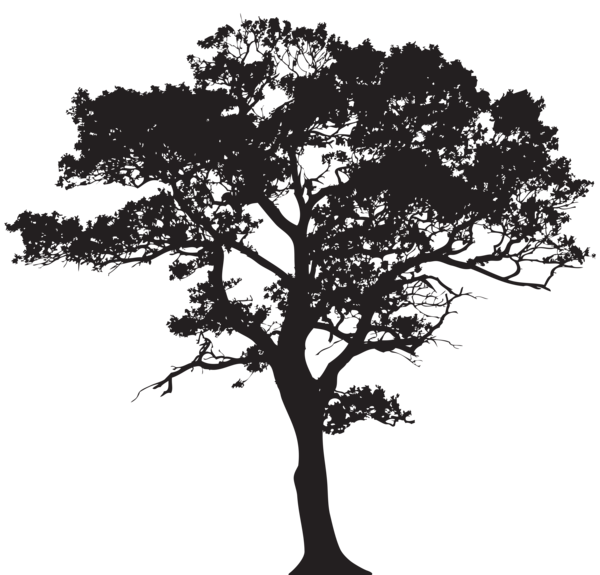 Tree trunk clipart black and white png library download Silhouette Tree PNG Clip Art Image | Trees | Pinterest | Art images ... png library download