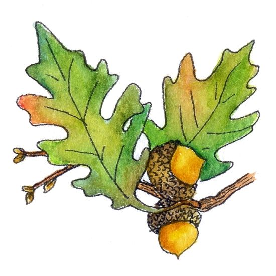 Acorn and oak leaf clipart graphic library stock Gallery For > Oak Leaf And Acorn Clip Art | Rug Hooking Leaves | Oak ... graphic library stock