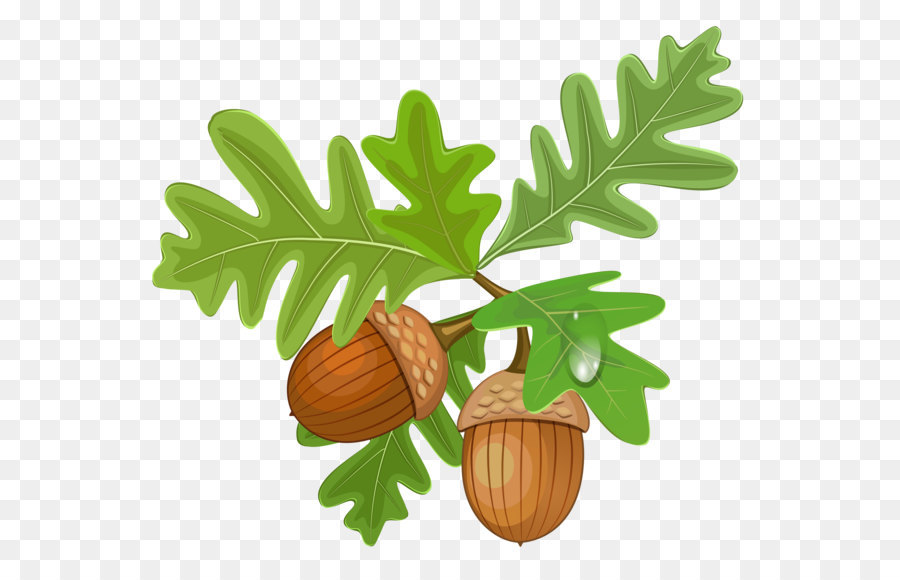 Acorn and oak leaf clipart image transparent stock Oak Tree Drawing png download - 3720*3250 - Free Transparent Acorn ... image transparent stock