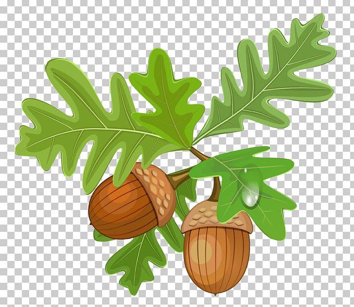 Acorn PNG, Clipart, Acorn, Acorns, Autumn, Clipart, Clip Art Free ... picture transparent