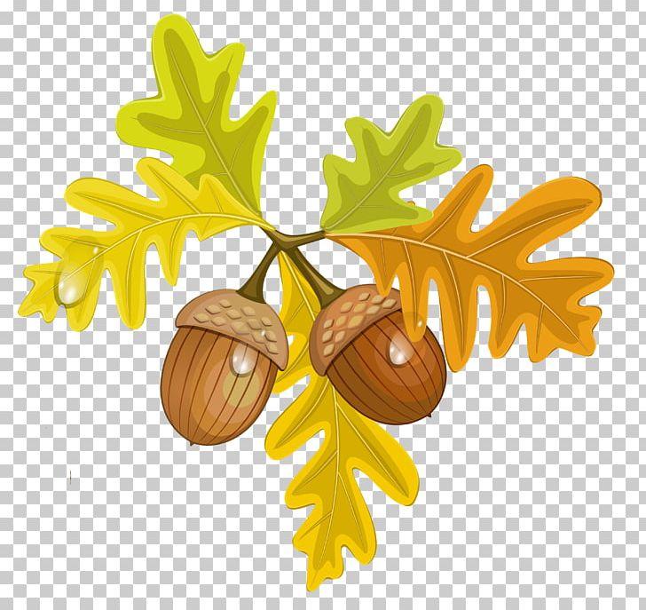 Acorn Autumn PNG, Clipart, Acorn, Autumn, Autumn Leaf Color, Clip ... clipart freeuse