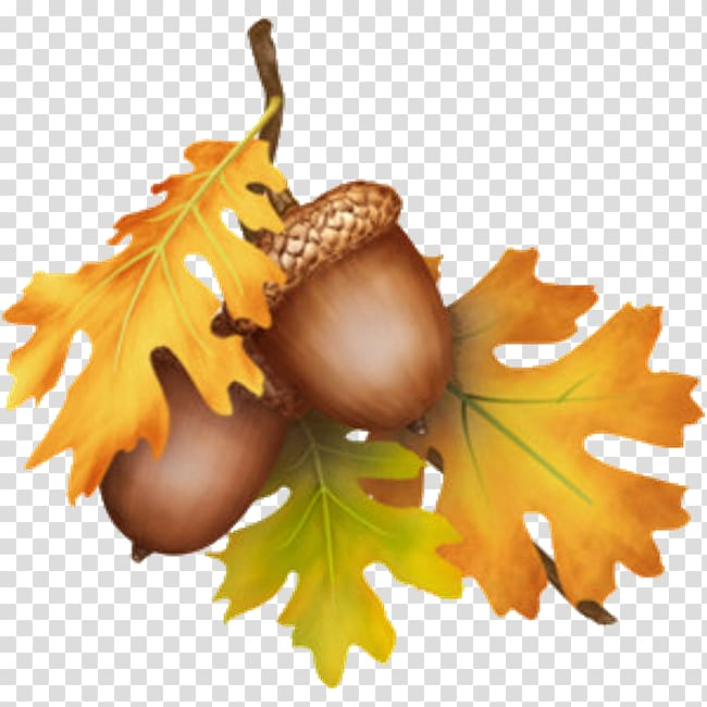Acorn Thanksgiving Tree , wounded heart transparent background PNG ... clip art freeuse stock