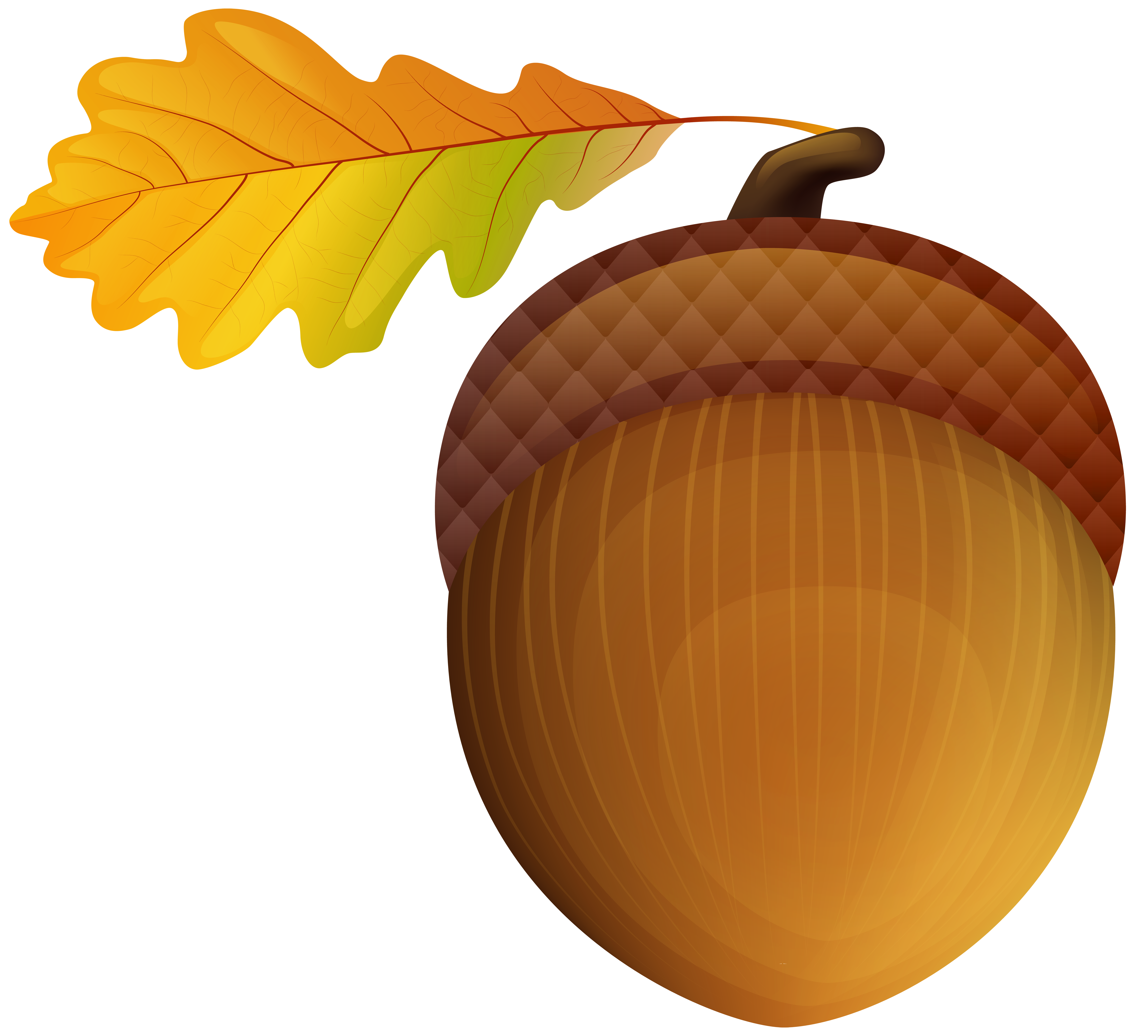 Acran clipart clip freeuse library Acorn PNG Clip Art Image | Gallery Yopriceville - High-Quality ... clip freeuse library
