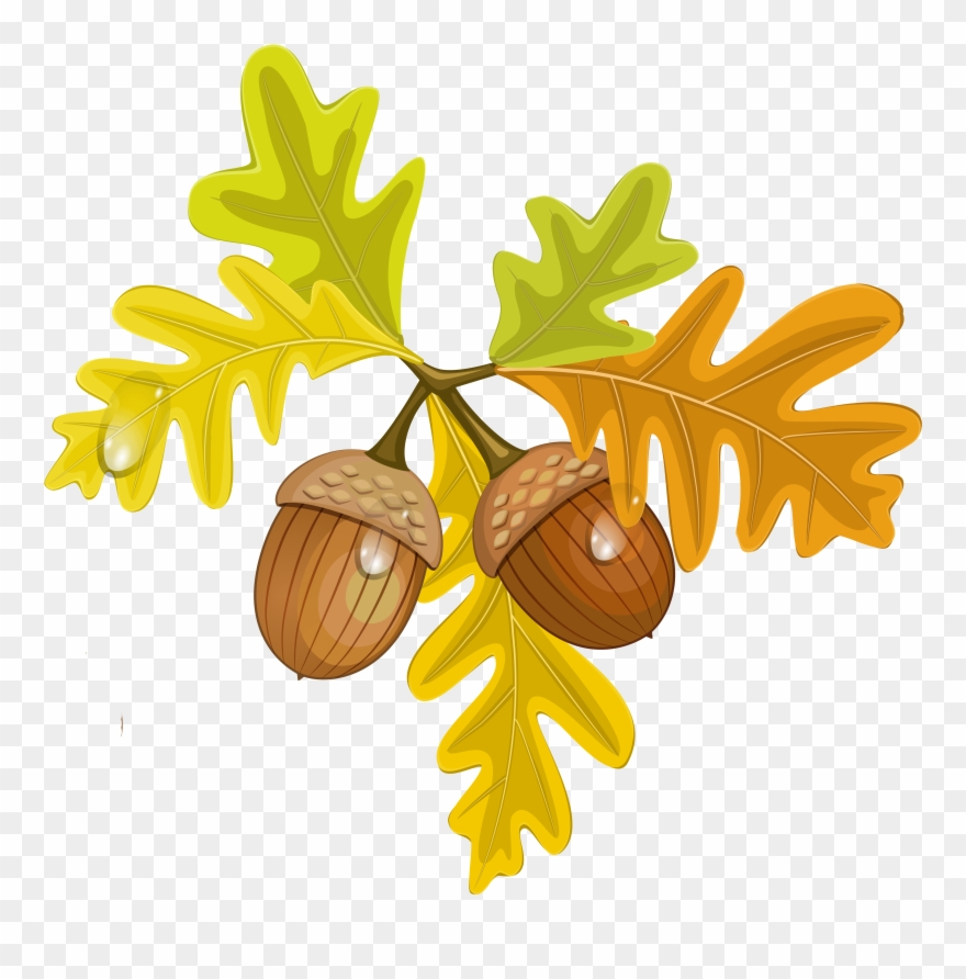 Transparent Fall Leaves With Acorns - Transparent Background Fall ... picture transparent download