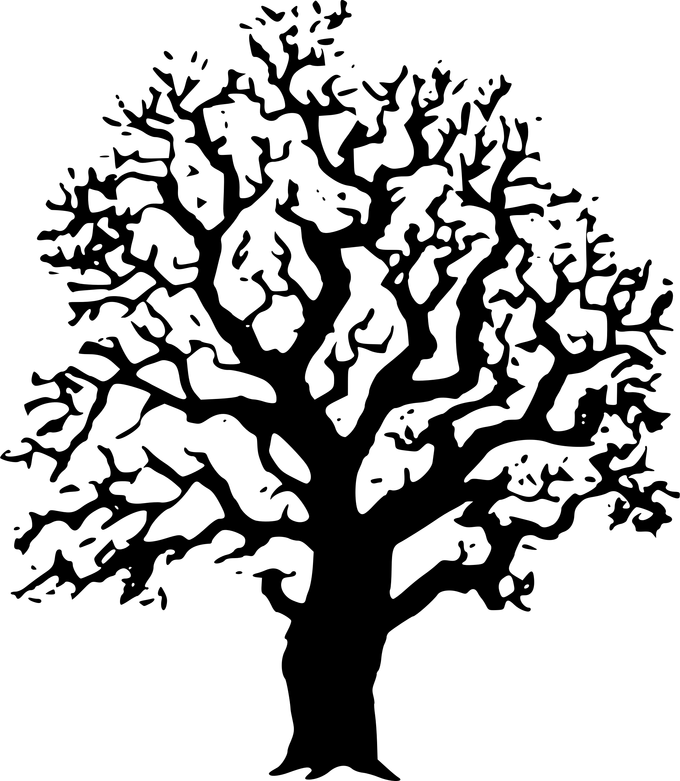 Acorn tree clipart png free download Black And White Photos Of Oak Trees | Siewalls.co png free download