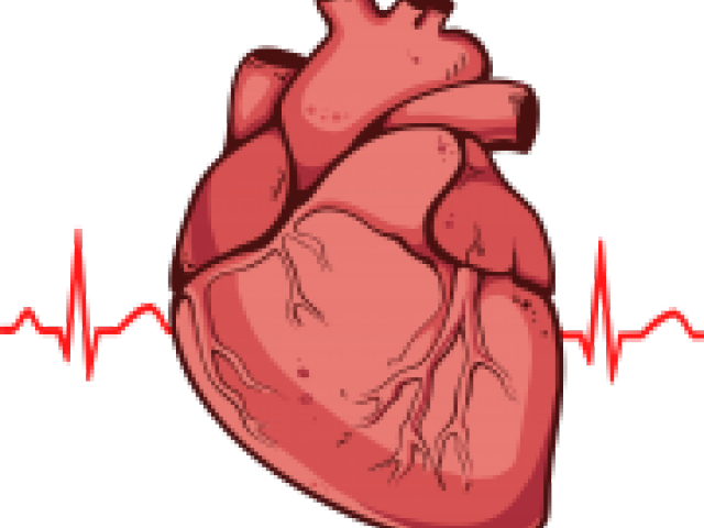 Actual heart clipart svg free stock Real Heart Clipart 4 - 906 X 1000 | carwad.net svg free stock