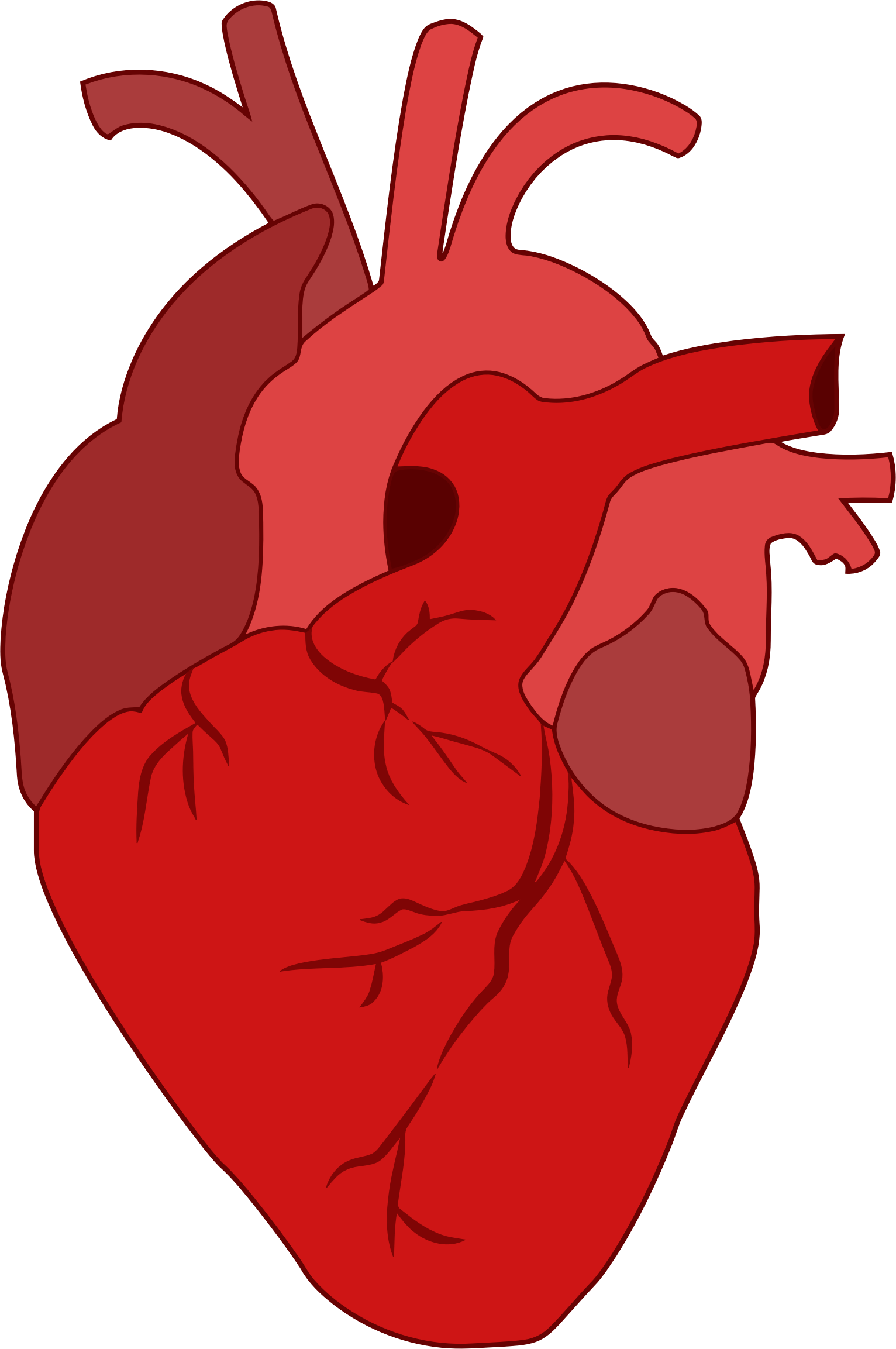 Actual heart clipart clip art black and white library 28+ Collection of Actual Heart Clipart | High quality, free cliparts ... clip art black and white library