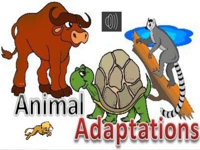 Adaptations clipart clip Adaptation clipart 7 » Clipart Station clip