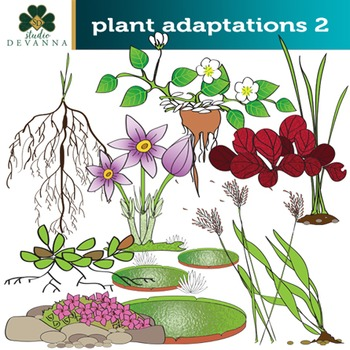 Adaptations clipart image freeuse library Plant Adaptations Clip Art Set # 2 image freeuse library