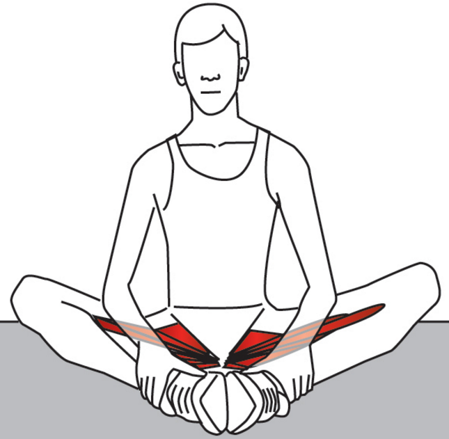 Treating the Hip Adductors with Trigger Point Therapy – Stuart Hinds ... image transparent stock
