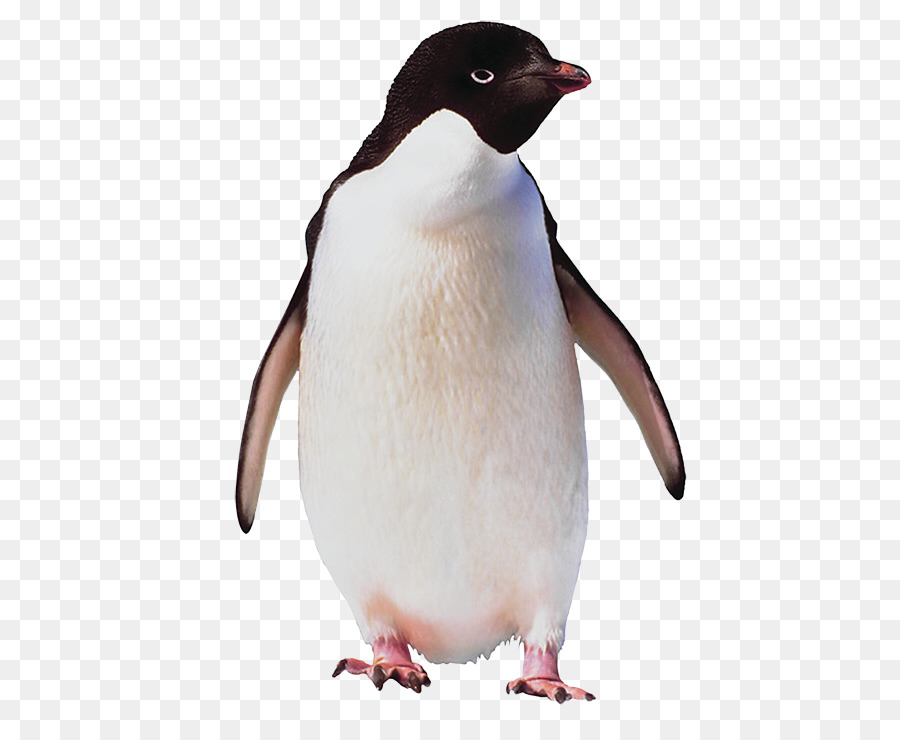 Adélie penguin Bird Antarctica Emperor Penguin - Penguin picture transparent library