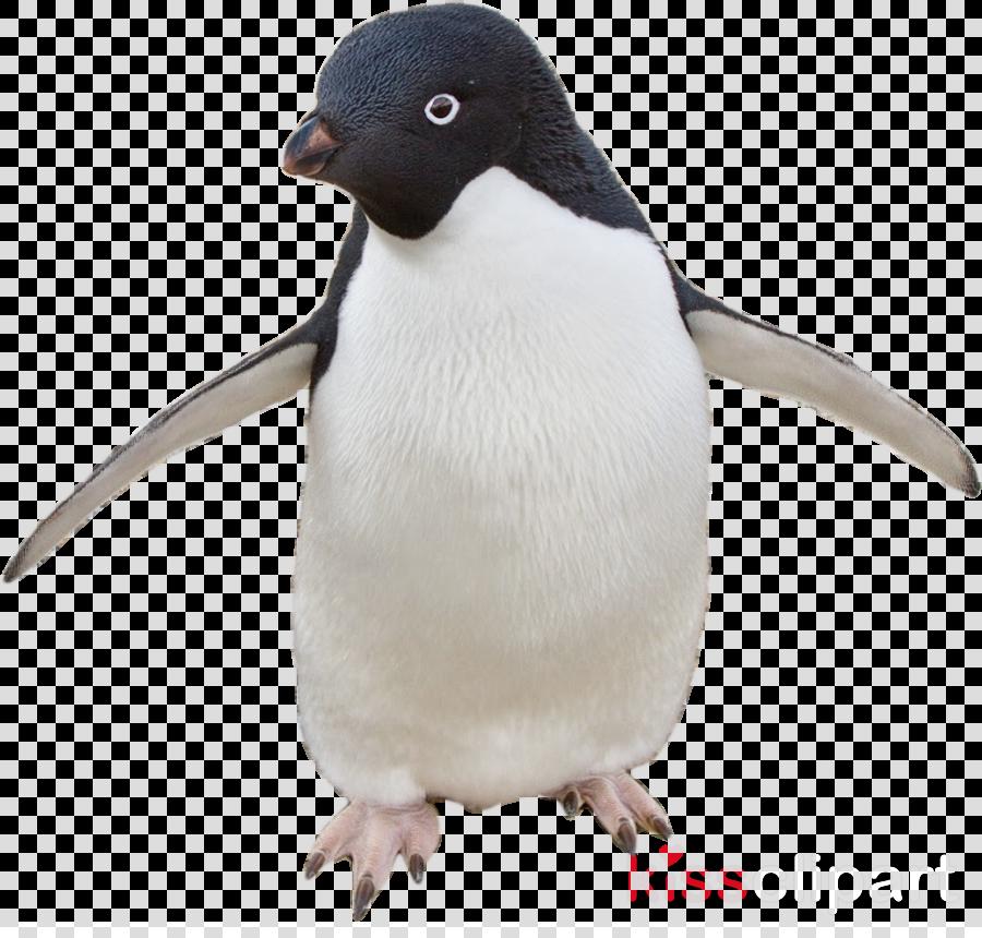 Penguin Cartoon clipart - Penguin, Bird, transparent clip art graphic freeuse download