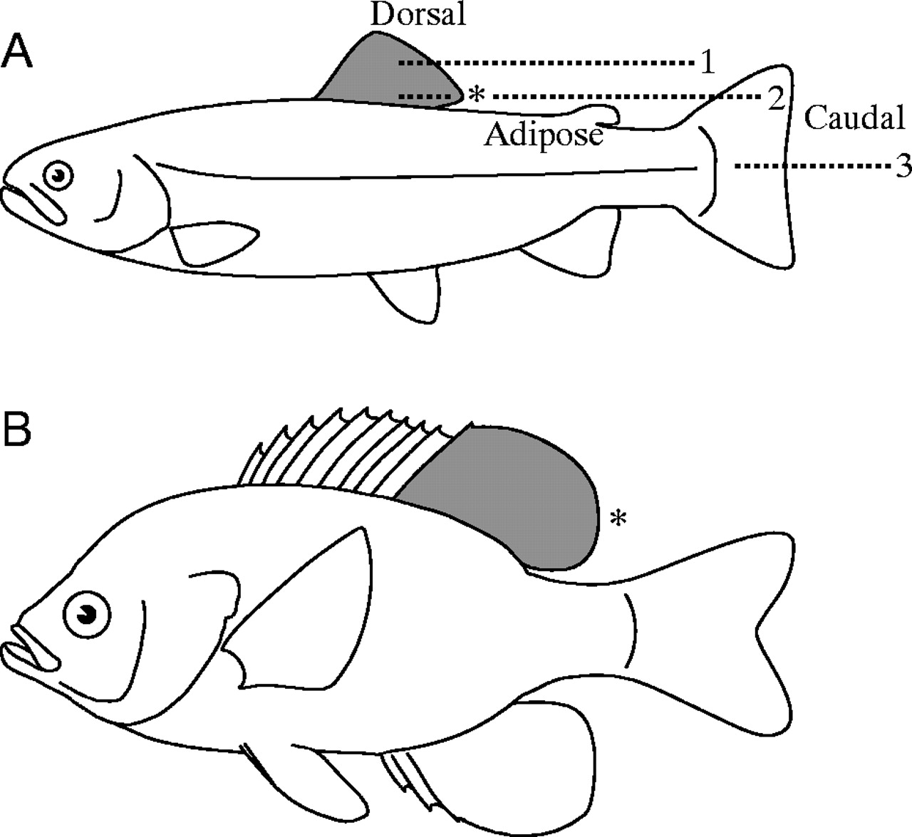 Adipose fin clipart clip art royalty free library Locomotor function of the dorsal fin in rainbow trout: kinematic ... clip art royalty free library