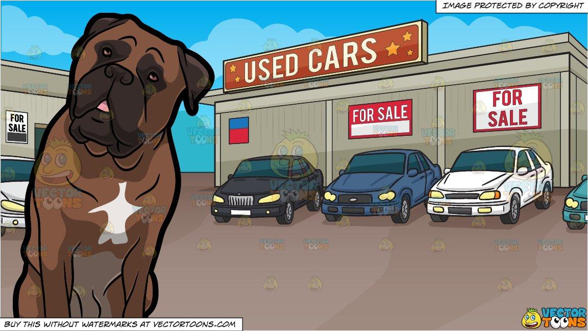 Adorable vehicle clipart clip free download An Adorable Bull Mastiff Pet Dog and Used Car Lot Background clip free download