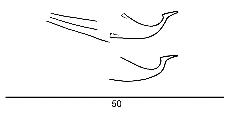 Adult male exotic clipart freeuse stock Factsheet - Schizotetranychus lechrius Rimando 1962 ^^ freeuse stock