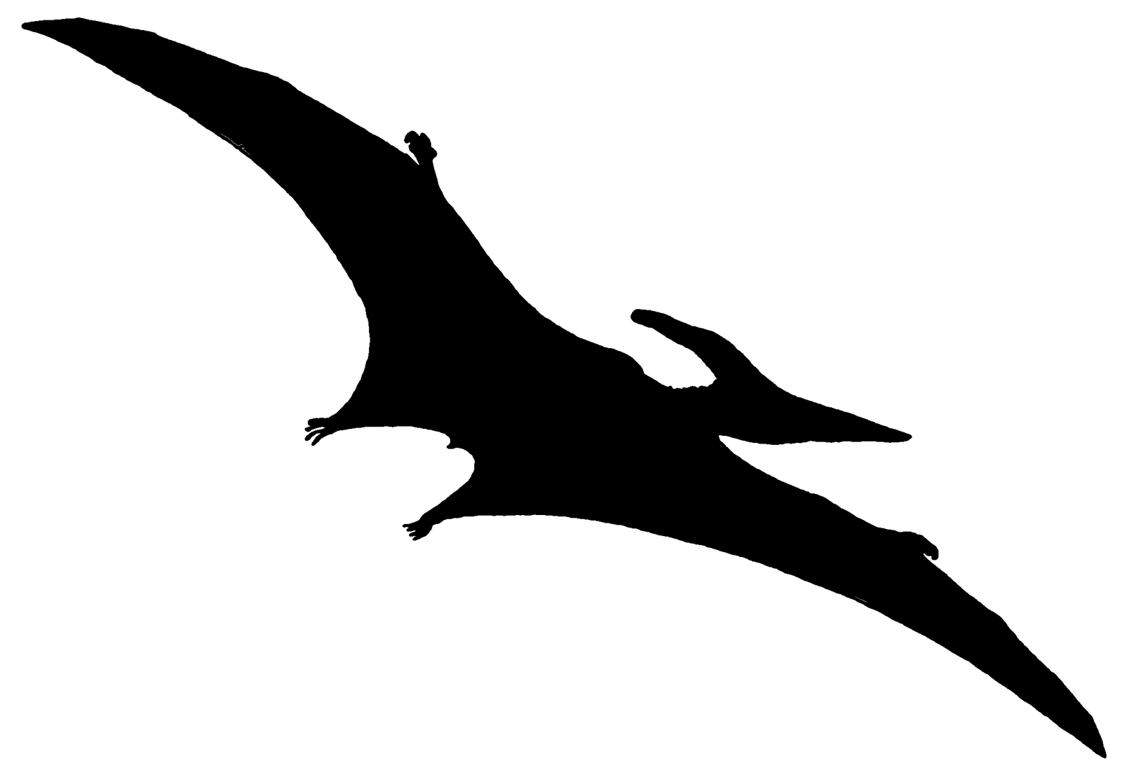 Adult pterodactyl clipart image library stock Pterodactyls Like small bird tattoos   Silhouette Project Ideas ... image library stock