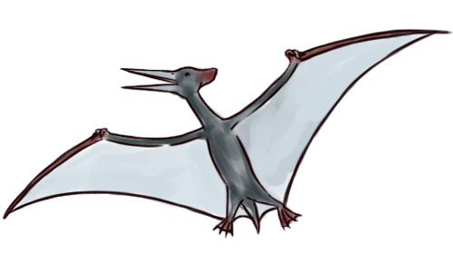 Adult pterodactyl clipart picture library How to Draw a Pterodactyl: 6 Steps (with Pictures) - wikiHow picture library