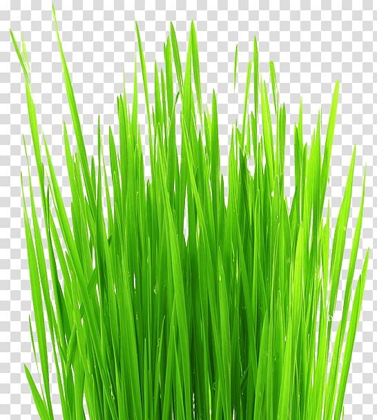 Aerate clipart vector royalty free library Lawn aerator Grass Weed, flourishing transparent background PNG ... vector royalty free library