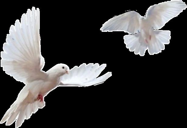 Aesthetic clipart bird image free birds bird aesthetic tumblr animal white... image free