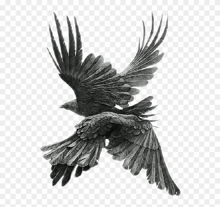 Aesthetic clipart bird clip art black and white library birds #blackbird #blackbirds #bird #aesthetic #fly - Transparent ... clip art black and white library