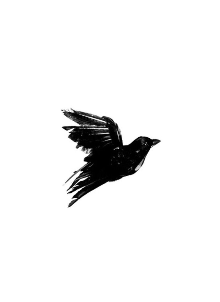 Aesthetic clipart bird image royalty free Blackbird   music in 2019   Black, white aesthetic, White aesthetic ... image royalty free