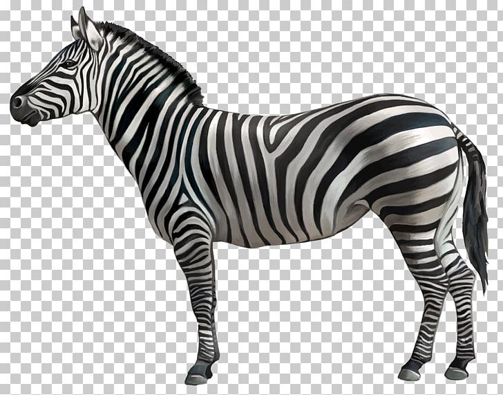 Aesthetic clipart zebra png download Zebra , Zebra , black and white zebra PNG clipart   free cliparts ... png download