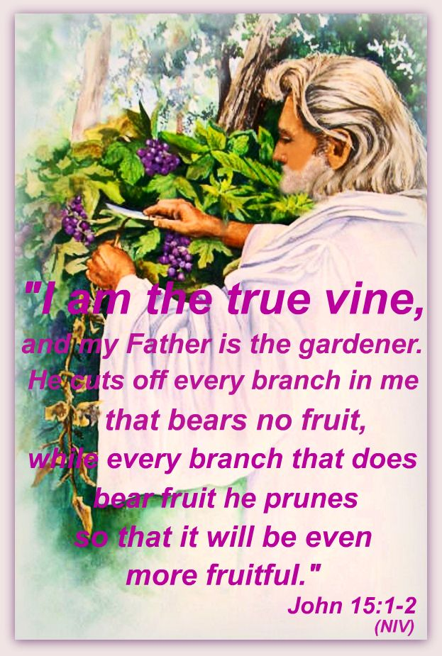 African american christian men clipart of the true vine clip royalty free stock I am the true vine, and my Father is the gardener. He cuts off every ... clip royalty free stock