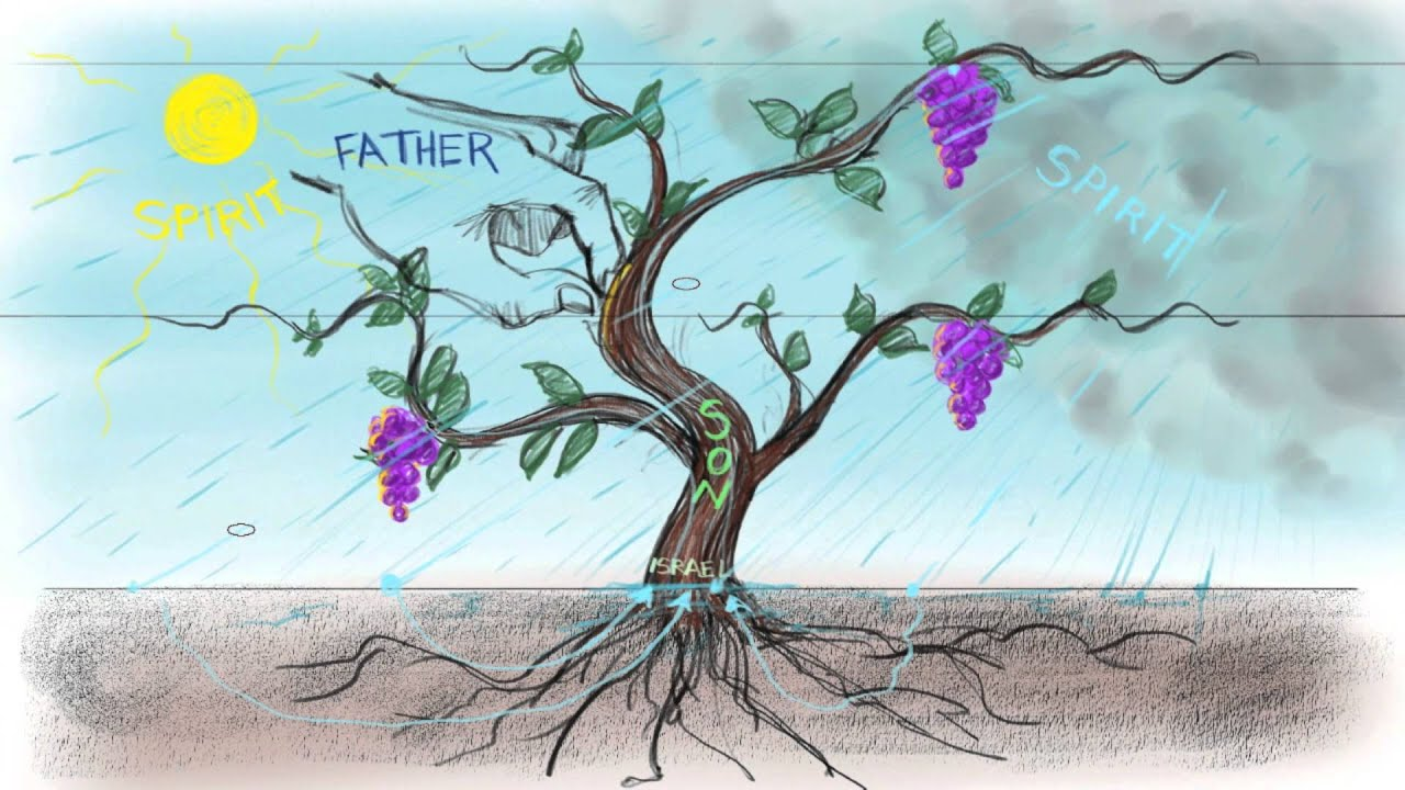 African american christian men clipart of the true vine image royalty free The Vine and the Branches | John 15:1-15 image royalty free