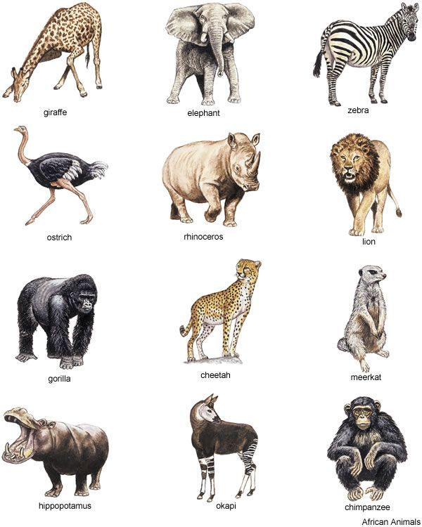 Portal . Free african animal clipart