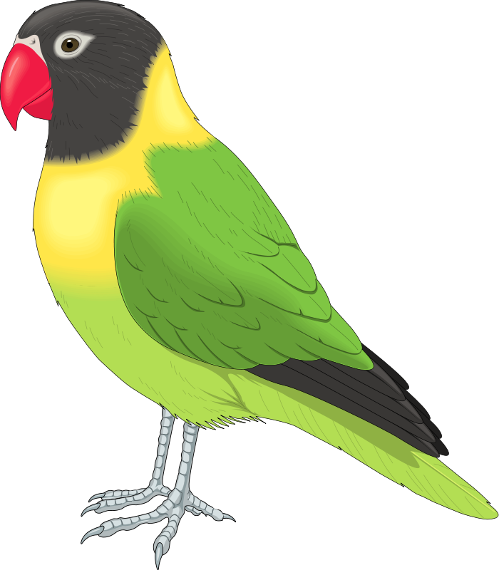 African birds clipart clip freeuse download Free Bird Flying Clipart, Download Free Clip Art, Free Clip Art on ... clip freeuse download