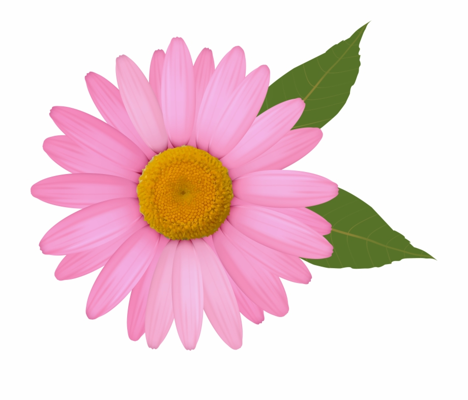 African daisy clipart picture royalty free stock Clip Arts Related To - Pink Daisy Flower Clipart Free PNG Images ... picture royalty free stock