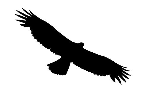 African eagle flying clipart png transparent Eagle Soaring - ClipArt Best   jewelry tutorial   Eagle silhouette ... png transparent