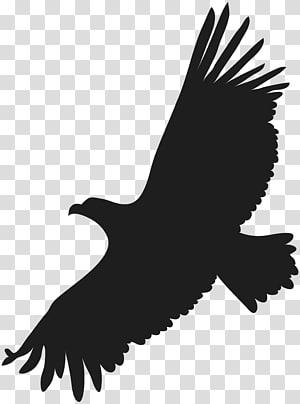 African eagle flying clipart svg download Forever Living logo art, Forever Living Products Aloe vera Jai ... svg download