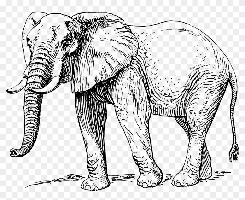 African elephant clipart pictures picture free Big Image - African Elephant Clipart Black And White, HD Png ... picture free