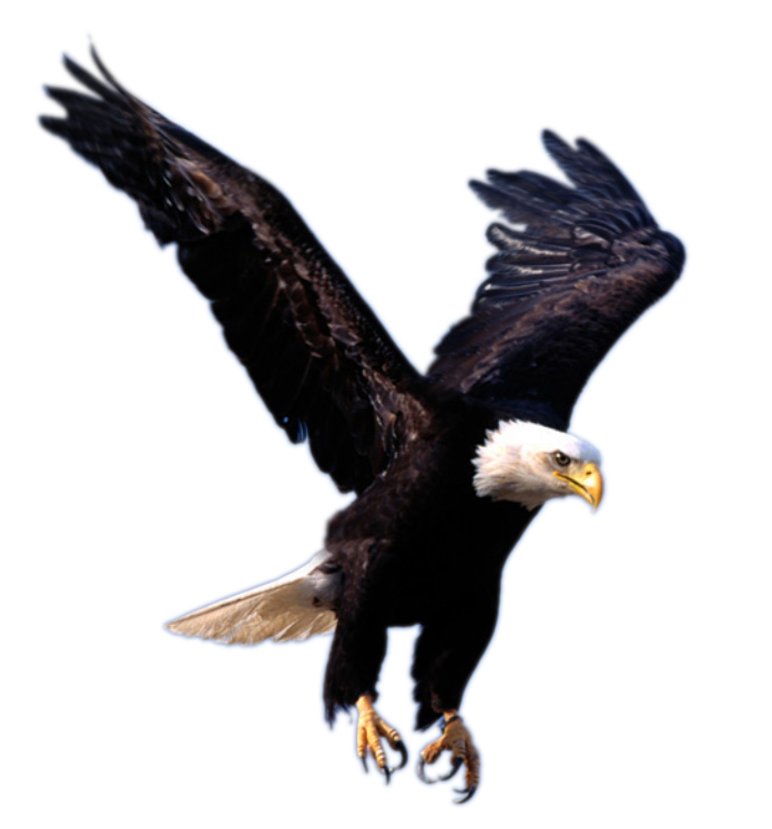 African fish eagle clipart freeuse library Eagle PNG image, free picture download freeuse library