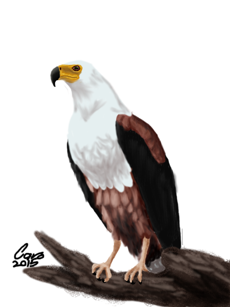 African fish eagle clipart jpg free stock 28+ Collection of African Fish Eagle Drawing | High quality, free ... jpg free stock