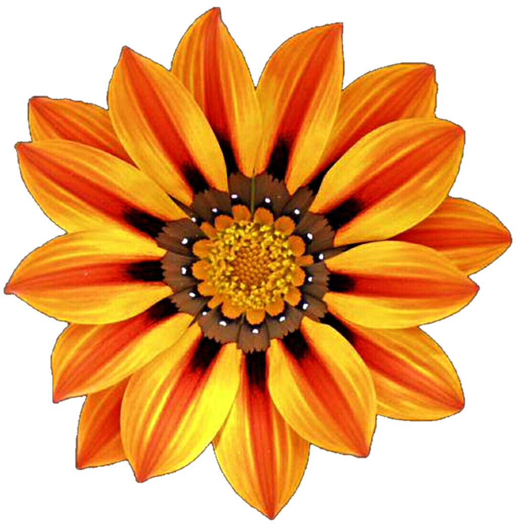 African flowers clipart clipart freeuse download African daisy flower clipart images gallery for free download ... clipart freeuse download